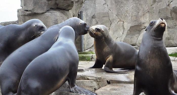 Zoo am Meer Bremerhaven Bewertung