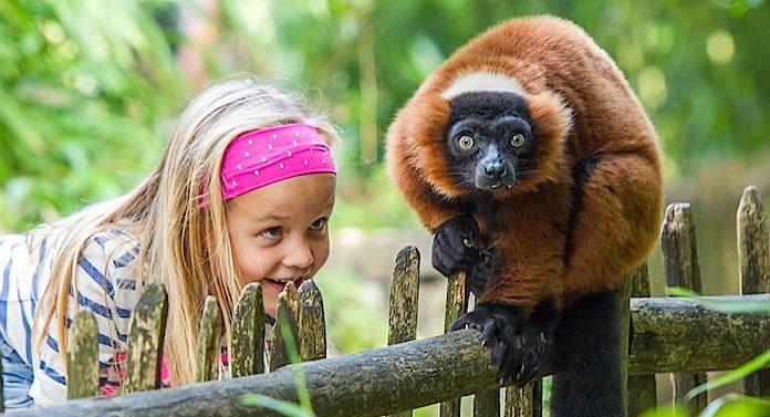 Affenpark Apenheul Gutschein