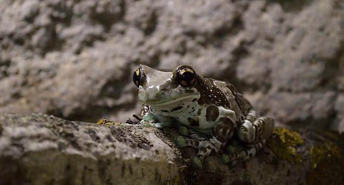 Reptilien Zoo Landau Gutschein