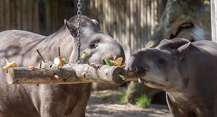 Zoo Berlin Gutschein Übernachtung