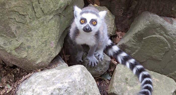 Zoo Veldhoven Gutschein