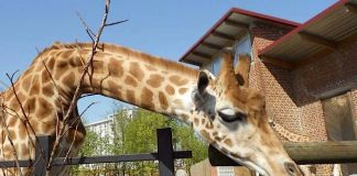 Zoo de Maubeuge Gutschein