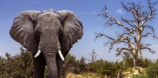 Abendsonne Afrika Gewinnspiel Botswana Reise gewinnen