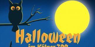 Kölner Zoo Halloween