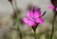 Krombacher Geschenk Wildblumenmischung