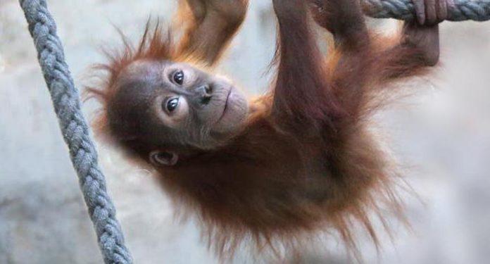 Zoo Frankfurt Jahresbericht Bilanzzahlen