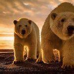 Geschenk für Kinder Buch Klimafieber
