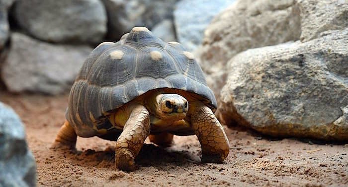 Tierpark Hellabrunn Schildkröte