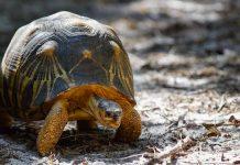 Tierpark Hellabrunn Strahlenschildkröte