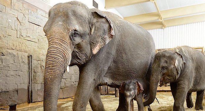 Tierpark Berlin Elefant