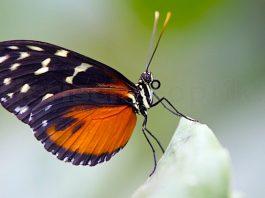 Alaris Schmetterlingspark Buchholz Gutschein