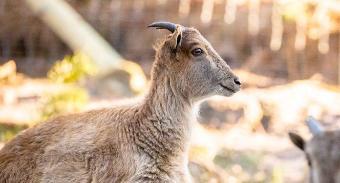 Wildpark Lüneburger Heide Gutschein mit 21 Euro Rabatt