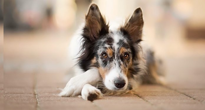PURINA AdVENTuROS Hundesnack kostenlos
