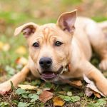 Purina Hundefutter Produktprobe