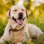 TENETRIO Hundefutter Produktprobe