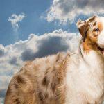 MyDog365 Online Hundeschule kostenlos
