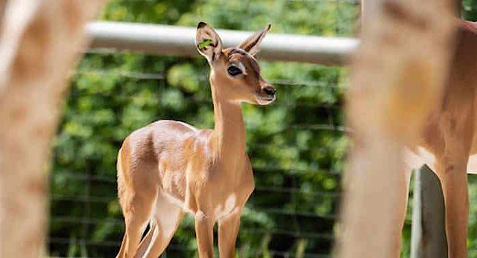 Stadt Köln Gewinnspiel Zoo Köln Gutschein