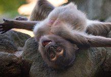 Ratgeber Tier Fotos Zoo Tierpark