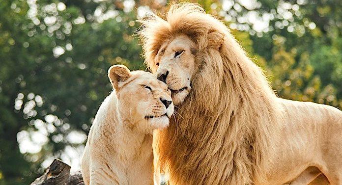 Safariland Stukenbrock Gutschein