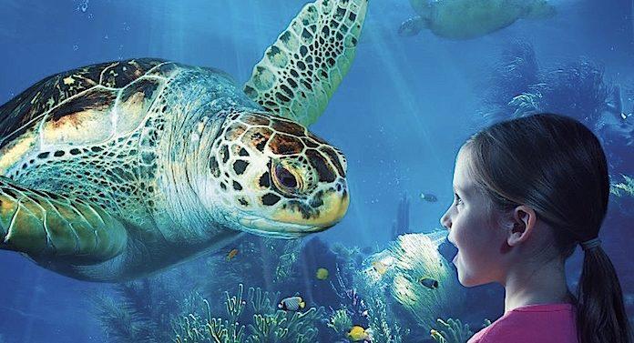 Sea Life 2 für 1 Gutschein Saison 2020 2021 mit 50 Prozent Rabatt
