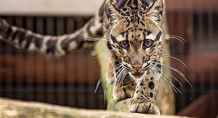 Wildkatzenzentrum Felidae Gutschein