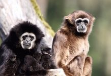 Rossmann Serengeti-Park Gutschein