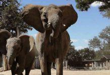 Serengeti-Park Zoo Halle