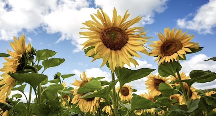 Umweltbundesamt Ratgeber für Gesundheit im Sommer