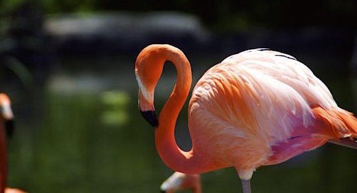Zoo Odessa: Daten Fakten Geschichte vom Zoo Ukraine