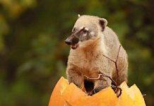 Tierpark Hagenbeck: Hamburger Zoo möchte keine Futterspenden