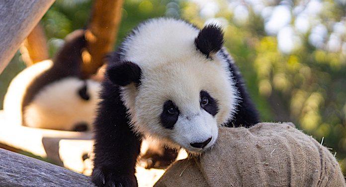 Zoo Berlin: Corona Maskenpflicht in beiden Berliner Tiergärten