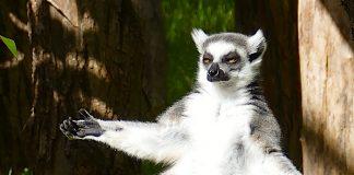 Zoo Heidelberg: Schließung wegen Corona bis Ende November 2020