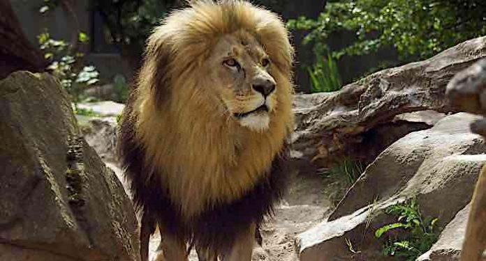 Zoo Halle: Versorgung der Tiere Grund für Schließung