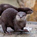 Berliner FamilienPass: Freizeitpark und Tierpark Rabatte Saison 2021