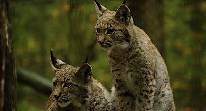 Corona: Tierpark in Schleswig-Holstein öffnen für Besucher