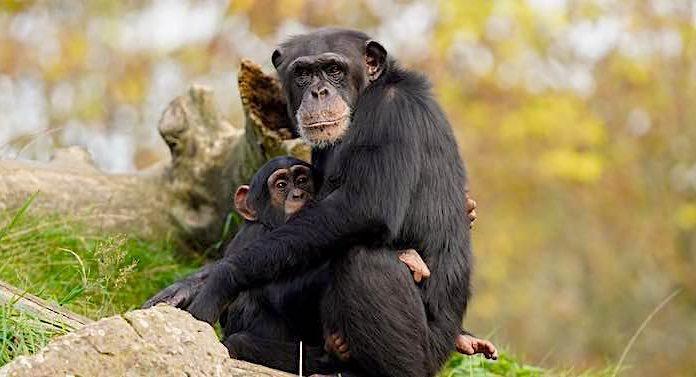 ZOOM Erlebniswelt: Anzahl von Tierpatenschaften im Jahr 2020 verdoppelt