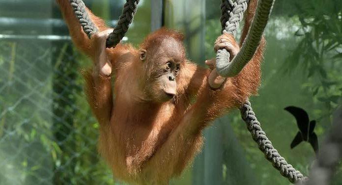 Corona Lockdown: Zoos in Bayern machen Millionenverluste
