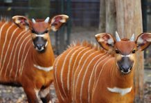 Corona-Pandemie: Finanzloch bei der Münsterländer Zoos