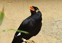 Tierpark Görlitz: Futter wird wegen Corona-Pandemie knapp