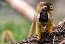 Zoo Neuwied: Spenden retten Zoo vor der Insolvenz