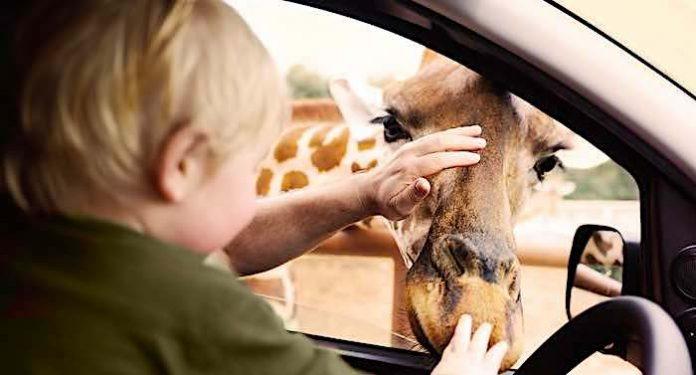 Safariland Stukenbrock: Auto-Safari startet am 26. Februar 2021