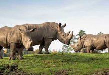 Serengeti-Park: Erstes Breitmaulnashornbaby in Europa geboren