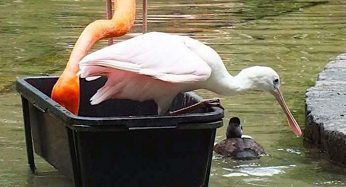 Tierpark Cottbus: Wiedereröffnung unter strengen Corona-Auflagen