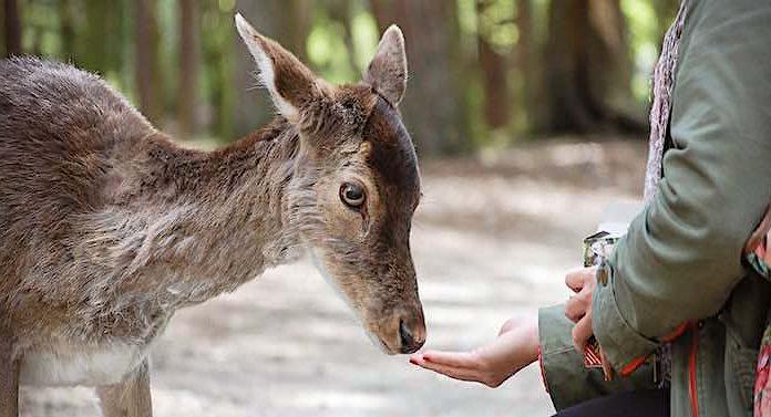 Corona: Zoos und Tierparks in Niedersachsen wollen öffnen