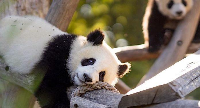 Tiere - beliebt in der Gesellschaft und im Zoo