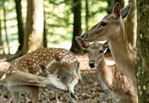 Erlebnispark Tripsdrill: Wildpark öffnet mit Corona-Regeln im März 2021