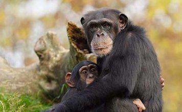 RUHR.TOPCARD 2021: Freizeitpark und Tierpark Rabatt Angebote