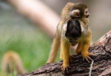 Corona: Zoos und Tierparks in Rheinland-Pfalz wieder geöffnet