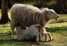 Schleswig-Holstein: Zoos und Tierparks mit Corona-Regeln geöffnet