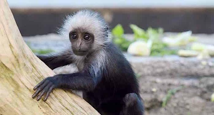 Tiergarten Schönbrunn Gutschein eTicket Corona sicher online kaufen
